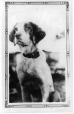 MP-0000.597.1 | Dog with collar, 1910-27 | Photograph | Captain George E. Mack |  |