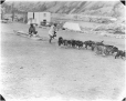 MP-0000.597.190 | Dog team, pulling sled on gravel, about 1919 | Photograph | Captain George E. Mack |  |