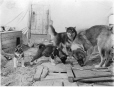 MP-0000.597.202 | Two dogs and two puppies, 1917-27 | Photograph | Captain George E. Mack |  |