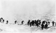 MP-0000.597.209 | Men returning from hunting expedition, dragging seals, 1927 | Photograph | Captain George E. Mack ?; Frederick W. Berchem ? |  |