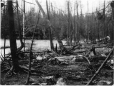 MP-0000.597.258 | Dead trees at water's edge, about 1919 | Photograph | Captain George E. Mack |  |