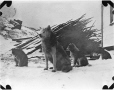 MP-0000.597.394 | Sled dog and two puppies in settlement, 1910-27 | Photograph | Captain George E. Mack |  |