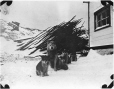 MP-0000.597.395 | Sled dog and puppies in settlement, 1910-27 | Photograph | Captain George E. Mack |  |