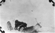 MP-0000.597.454 | Sled dogs in harness and wounded deer, 1917(?) | Photograph | Captain George E. Mack |  |