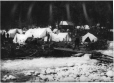 MP-0000.103.6 | Sheep Camp, YT, 1897 | Photograph | Edwin Tappan Adney |  |