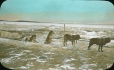 MP-0000.25.1047 | Dog team and sled, Ile-à-la-Crosse, SK, about 1910 | Photograph | Anonyme - Anonymous |  |
