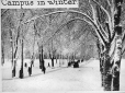 MP-0000.25.244 | Campus and Avenue in winter, McGill University, Montreal, QC, about 1925 | Photograph | Anonyme - Anonymous |  |