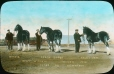 MP-0000.25.427 | Clydesdales primés, appartenant à H. C. Watson, Oxbow, Sask., 1916 | Photographie | Anonyme - Anonymous |  |