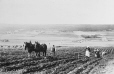 MP-0000.25.497 | Ploughing with team of horses, about 1910 | Photograph | Anonyme - Anonymous |  |