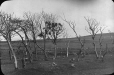 MP-0000.25.498 | Arbres morts et terre agricole, 1907-1908 | Photographie | Anonyme - Anonymous |  |