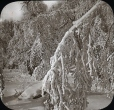 MP-0000.25.754 | Tree branches covered with frost, Niagara Falls, ON, about 1875 | Photograph | J. Lévy & Cie |  |
