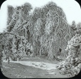 MP-0000.25.755 | Frost covered trees, Niagara Falls, ON, about 1875 | Photograph | J. Lévy & Cie |  |