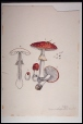M991.14.107 | Amanita (rubesceus) | Peinture | William Van Horne |  |
