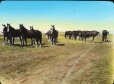 MP-0000.158.67 | Chevaux, Ouest canadien, vers 1923 | Photographie | Anonyme - Anonymous |  |