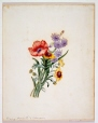 M1230 | Poppy, Hyacinth and Coreopsis, 1839 | Painting | Anne Ross McCord |  |