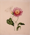 M987.158.2   Convolvus and pink flower   Painting   Anne Ross McCord     