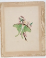 M987.158.3   Green Luna moth with apple blossom   Painting   Anne Ross McCord     
