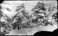 """MP-1974.133.58   Snowy trees, """"Lord's Farm"""", Drummondville, QC, about 1895   Photograph   Charles Howard Millar     """