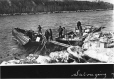 MP-1976.24.27 | Salvaging from a wrecked scow, Revillon Frères, ON, about 1910 | Photograph | Samuel Herbert Coward |  |