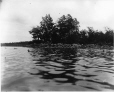 MP-1977.76.20 | Vue de North Point en direction est, lac Rice, Ont., 1896 | Photographie | Alfred Walter Roper |  |