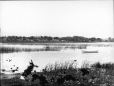 MP-1985.31.56 | Vue du littoral, QC, vers 1900 | Photographie | N. M. Hinshelwood |  |