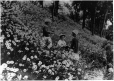 MP-1987.61.1.74 | Three children in field of dandelion seeds, Bordeaux, QC, 1927 | Photograph | Harry Sutcliffe |  |