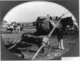 MP-1988.74.62 | Indian pony and travois, Fort McLeod, AB, about 1905 | Photograph | Miss Campbell |  |