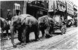 MP-1989.15.11 | Elephants pulling circus cart, about 1910 | Photograph | Anonyme - Anonymous |  |