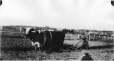 MP-1992.9.2.115 | Plowing with oxen, Neuville area, QC, 1929 | Photograph | Robert Bruce Bennet |  |