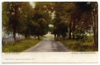 CP528 | Maple Avenue, Sussex, New Brunswick | Postcard | Laura Eliza Spooner |  |