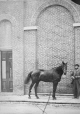 I-12786.1 | Capt. Hope and horse, Craig Street, Montreal, QC, 1864 | Photograph | William Notman (1826-1891) |  |