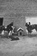 I-13246.1 | W. F. Kay's horse and dogs, Montreal, QC, 1864 | Photograph | William Notman (1826-1891) |  |