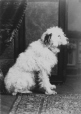 II-79558.1 | Miss Phillips' dog, Montreal, QC, 1886 | Photograph | Wm. Notman & Son |  |