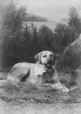 II-80246.1 | Allan H. Wood's dog, Montreal, QC, 1886 | Photograph | Wm. Notman & Son |  |