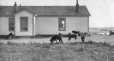 M2000.113.6.142 | Major Moodie's house and dogs, Fort Churchill, Hudson Bay, MB, 1909 | Photograph | Hugh A. Peck |  |