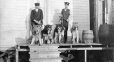 M2000.113.6.145 | Royal North West Mounted Police officers with dogs, Fort Churchill, MB, 1909 | Photograph | Hugh A. Peck |  |