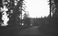 M2003.28.131   Road and trees, Stanley Park ?, BC, 1907   Photograph   Burkewood Welbourn     