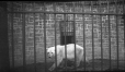 M2003.28.18 | Bear in cage, Holt Renfrew zoological collection at Montmorency, near Quebec City, QC, 1907 | Photograph | Burkewood Welbourn |  |