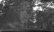 M2003.28.42 | Trees in Queens Park, Toronto, ON, 1907 | Photograph | Burkewood Welbourn |  |
