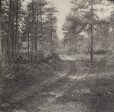 M2011.64.2.2.157.1 | Dirt road through forest, QC, about 1914 | Photograph | Harry Sutcliffe |  |