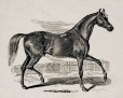 M911.1.60 | Cheval | Estampe | John Henry Walker (1831-1899) |  |