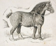 M930.50.1.150 | Cheval | Estampe | John Henry Walker (1831-1899) |  |