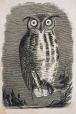 M930.50.1.152 | Owl and mouse | Print | John Henry Walker (1831-1899) |  |