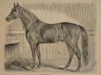 M930.50.1.154 | Cheval | Estampe | John Henry Walker (1831-1899) |  |
