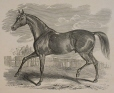 M930.50.1.159 | Cheval | Estampe | John Henry Walker (1831-1899) |  |