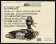 M988.175.160 | Aislin's Bestairy: Plaid Mallard | Drawing | Aislin (alias Terry Mosher) |  |