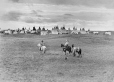MP-0000.338.5 | Aboriginal encampment near Calgary, AB, about 1925 | Photograph | H. Pollard |  |