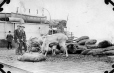 MP-0000.597.355 | Reindeer on leash, eating moss (?) from sacks, ship in background, 1921 | Photograph | Captain George E. Mack |  |