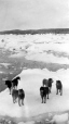 MP-0000.598.175 | Dogs on ice floe, about 1925 | Photograph | Captain George E. Mack |  |