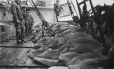 """MP-1984.127.77   Stowing part of a day's catch of seals on after deck of S. S. """"Nascopie"""", 1927   Photograph   Frederick W. Berchem ?; Captain George E. Mack ?     """